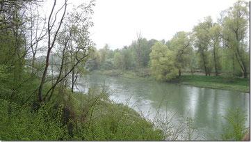 Ein Naturschutzgebiet von nationaler Bedeutung: der Auenwald im Aaretal. (Rupperswil, 5. Mai 2013)
