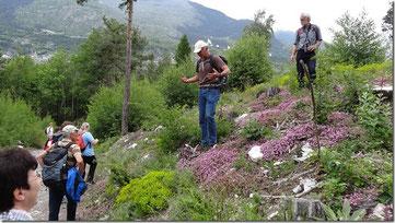 Das Wallis beeindruckt mit seiner vielfältigen Flora. (Pfynwald, 24. Mai 2014)