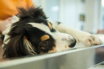 Kleintierpraxis Tierarzt Bonn Chirurgie