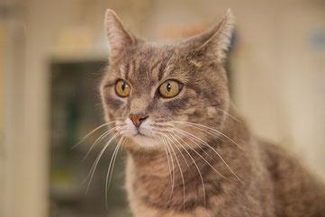 Kleintierpraxis Tierarzt Bonn Schmerztherapie