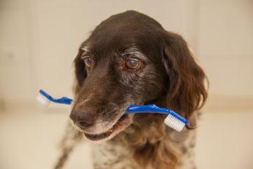 Kleintierpraxis Tierarzt Bonn Dermatologie