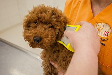 Kleintierpraxis Tierarzt Bonn Allgemeinmedizin