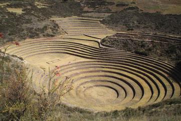les spirales de Moray