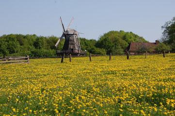 Kappenwindmühle im LWL-Freilichtmuseum © Stadt Detmold