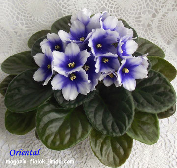 Oriental (Humako)