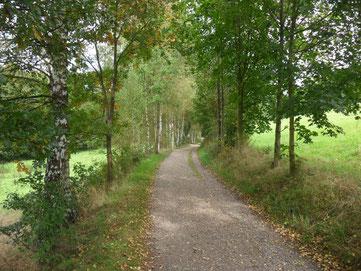 Wiesenweg zum Eckhardt-Teich