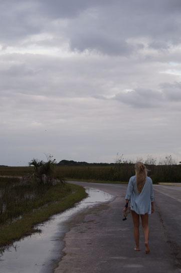 Shark Valley Everglades Florida