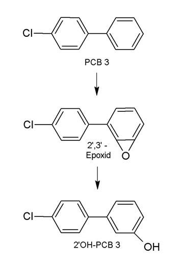 PCB 3 - Epoxid - OH-PCB 3