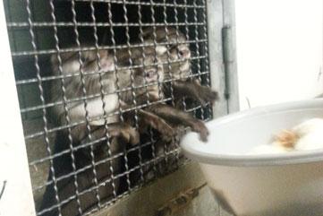 Otter-Fütterung beim Tierpatentag
