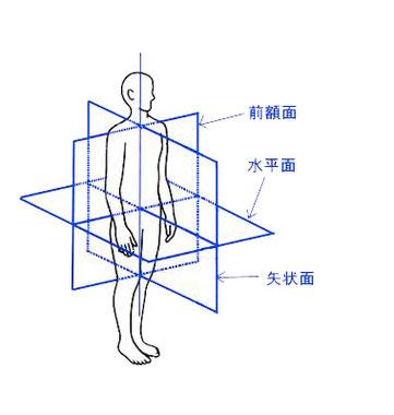 姿勢分析 アライメントチェック