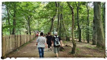 Wanderung durch den Buchenwald im Nationalpark Jasmund zum Kreidefelsen Victoriasicht