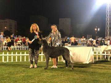 Erfolgreiche Deerhounds...., vielversprechende Deerhound Welpen vom Züchter in Deutschland...., Scottish Deerhounds Deutschland Nähe Schweiz/Luxemburg/Österreich!