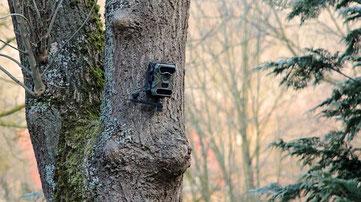 Wetterfestes Wildkamera als Überwachungskamera - Foto Pixapay
