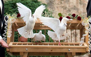 Tauben Hochlass auf Hochzeit