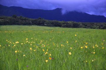 夜明け前のタデ原湿原