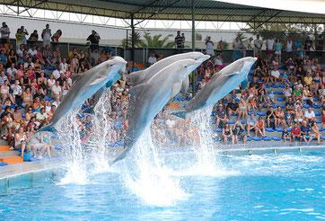 zoo-marine-algarve-family