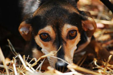 ängstlicher Hund. Photo von Katja by Pixabay. Herzlichen Dank!