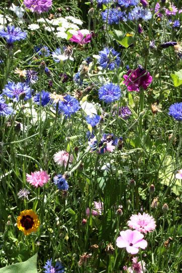 Blühstreifen am Gartenrand, in dem es summt und brummt (G. Franke, Juli 2019)