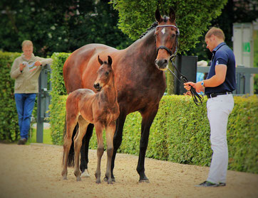 For Princess *04.06.2016 von For Romance I x Lanciano x Donnerschlag