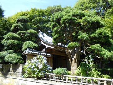 左右の樹木に包まれた山門