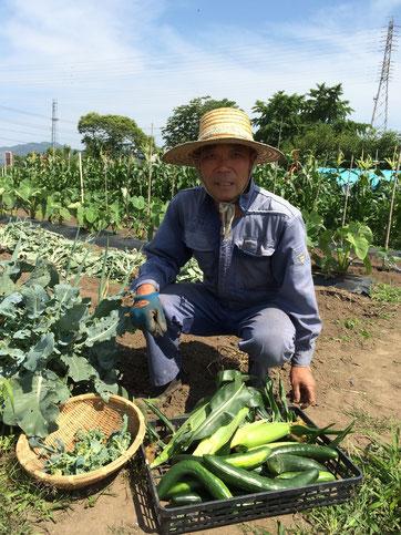 茶えずり懐石ランチの新鮮な野菜を栽培されている藤田さん