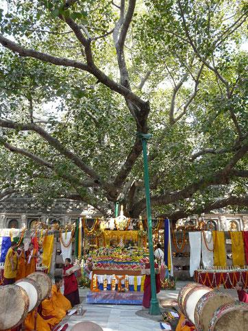 tibetische Tsog Puja unter dem Bodi Baum