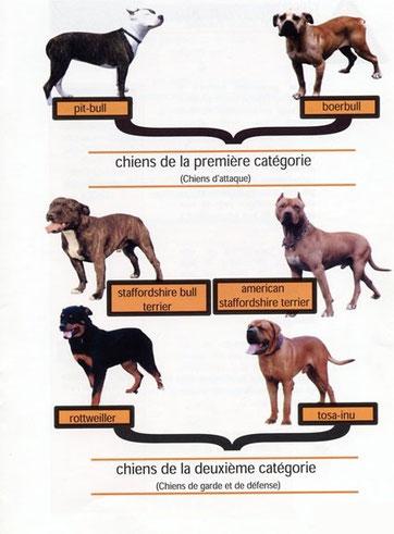 Tableau des chiens de première et seconde catégorie