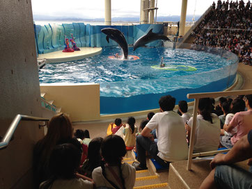 Watching the dolphin show