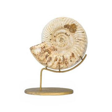 Fossilien sind im Trend als Wohndekoration.