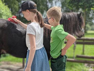 Ponys auf dem Bauernhof