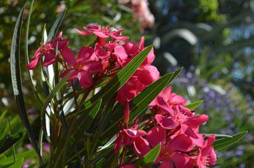 Jardin, un soin particulier est apporté aux extérieurs de chacun des gîtes.