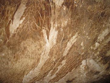 Mycel des Holzpilzes Echter Hausschwamm an einer Wand.