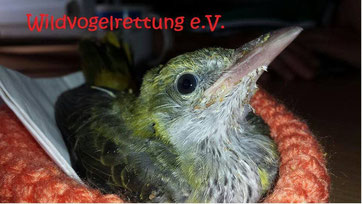 https://www.facebook.com/Wildvogelrettung