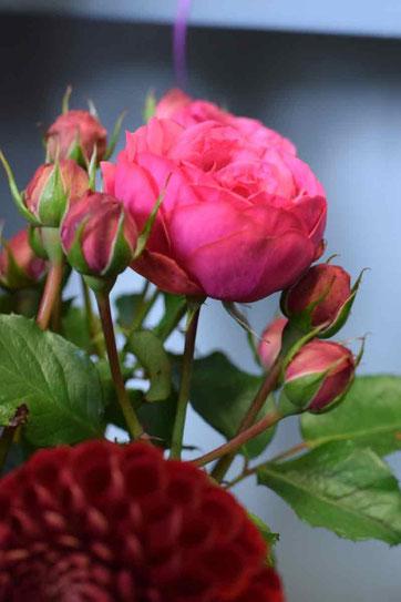 Rose Schnittblume Gais