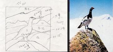 ライ鳥の写真がステンドグラスのイメージ