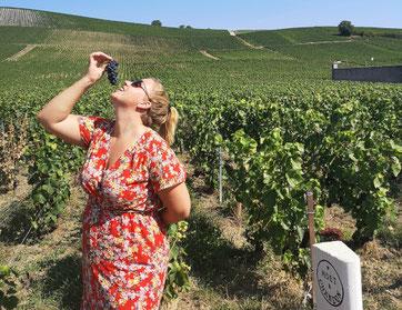 Champagne streek wijngaarden Moet