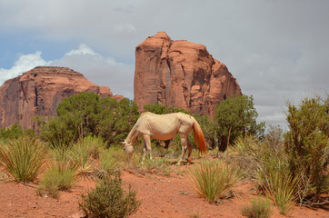 Navajo Mustang