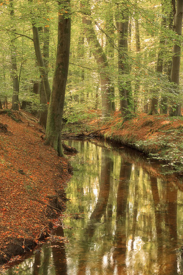 Hierdense beek, Leuvenumse bos