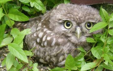 Foto: NABU Vogelschutzzentrum