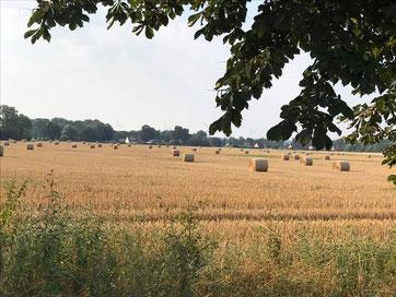 Bild der Prignitz mit Feld, Strohballen und Windrädern