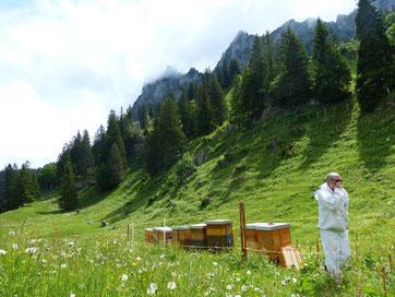 Bienenkisten im alpinen Hochtal Brecca