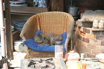 中庭の籐椅子でお昼寝するちーちゃん