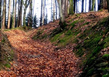 Hohlweg zum Gözenberg bei Meschenbach