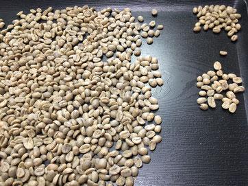 コーヒーの生豆を手作業で分別