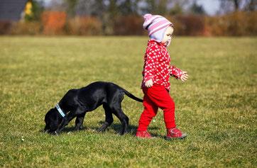 Kindergarten/Horthund: Auch ganz kleine Kinder profitieren von einem Hund in ihrer Einrichtung! Hier sieht man einen jungen, schwarzen Hundewelpen mit einem kleinen Mädchen beim Spielen.