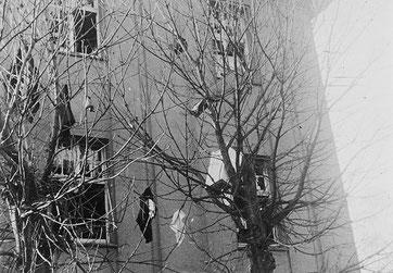 Mützen in einem Baum