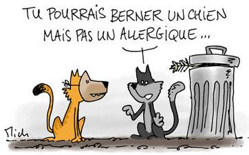chat sibérien hypoallergénique