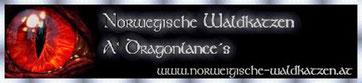 Banner Dragonlance's Norwegische Waldkatzen