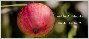 Roter Apfel am Baum-Welche Apfelsorte für den Kuchen