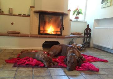 Hundeschule, Hundetraining, Hundeschule Butzbach, Entspannung, Ruhe